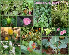 What a Southern Garden looks like in January.  The Educators' Spin On It: Gardening - The end of the season
