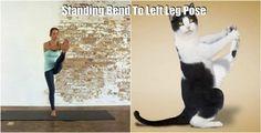 yogacı kedi...