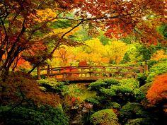 bridge-in-autumn-forest-1168485-1024x768.jpg (1024×768)