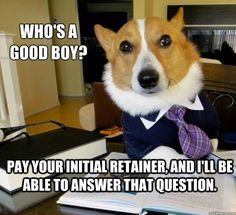 Initial Retainer - Lawyer Dog memes