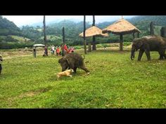 This Dog And Baby Elephant Are Proof That Best Friends Really Do Come In All Shapes And Sizes…