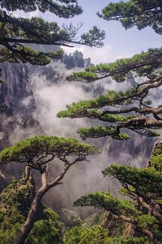 """""""Like a shy veiled beauty the pines covered the magnificent view of the mountains by Gunlekseng"""""""