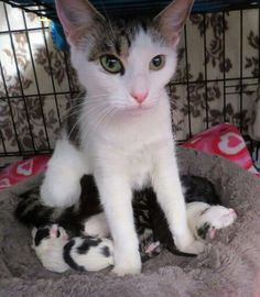 Mother and babies.