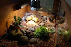 Our tortoise table is finally finished, with the top 'tort fort' habitat, and the bottom storage dresser. I also rearranged the inside a little.