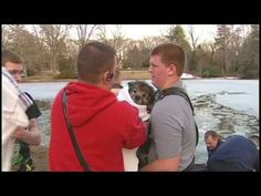 Dog rescued from icy pond [Delaware Online News Video] - YouTube