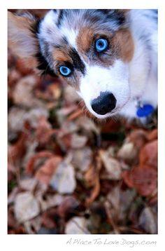 Piercing blue eyes!