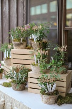 Ambiance végétale grâce à un plant de table totalement green. Des plantes, des batonnets en bois, des nombres et voilà.  http://www.savethedeco.com/