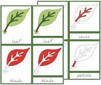 El jardín útil: Botánica
