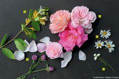 67 meilleures images du tableau Idées d associations   Planting ... 6f190c4da53