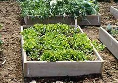 How to make a simple raised bed garden.