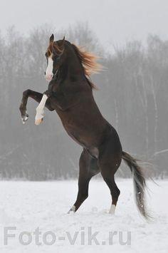 a0697ab72662d9108490fb963f6172d5--jumping-horses-equine-art.jpg (478×720)