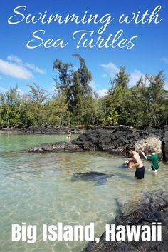 Swimming with Sea Turtles, Big Island, Hawaii