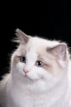 Pets, Gatos, Animales