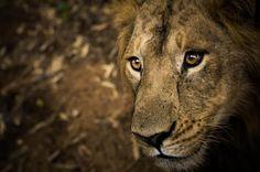 Las mejores fotografías de Naturaleza en los premios Sony 2013  Este año se han presentado más de 122.000 fotografías al concurso internacional de Sony.   El concurso está dividido en 6 categorías.   Estas maravillosas imágenes son algunas de las favoritas, en la categoría Naturaleza, para ganar el premio que se fallará el próximo mes de marzo.