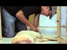 Animal Defenders short documentary teaser