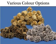 Pine cones for crafts in a variety of colours, shapes and sizes. Perfect for Christmas wreath making and other festive crafts Christmas Crafts For Adults, Festive Crafts, Wreath Making, How To Make Wreaths, Pine Cones, Christmas Wreaths, Herbs, Colours, Shapes