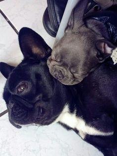 Je ne bouge pas, il dort... ...French Bulldog and Puppy.