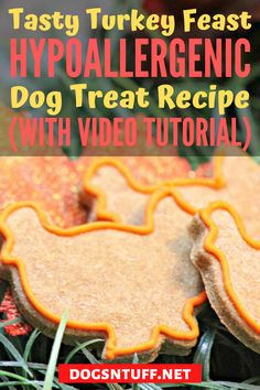 Thinking of what to do with the leftover turkey dinner? Why not turn it into homemade turkey dog treats so that your pooch will enjoy the Thanksgiving spirit too? #dogturkeyrecipes  #veggiedogrecipe #dogfood #dogrecipes Dog Treat Recipes, Dog Food Recipes, Hypoallergenic Dog Treats, Canned Dog Food, Dog Facts, Leftover Turkey, Homemade Dog Treats, Dog Quotes, Food Allergies