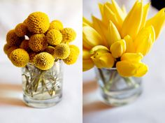 craspedia/billy buttons/billy balls in short vases