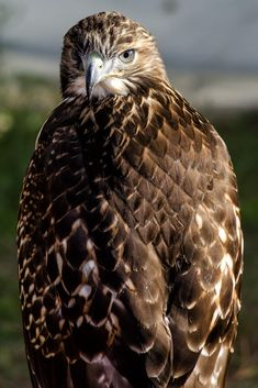 hawklook by Fabio Cappellini / 500px
