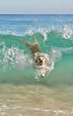 Got the Ball! Now i'll just bodysurf my way back...