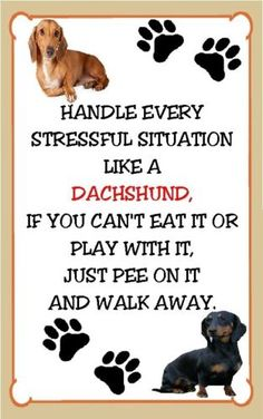 The Wiener dogs answer for everything. Dachshund Stressful Situation Magnet for The Refrigerator | eBay #DoxieDarlin'
