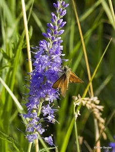 #Schmetterlinge -Naturerlebnis #Spreewald dann bitte www.hotel-stern-werben.de