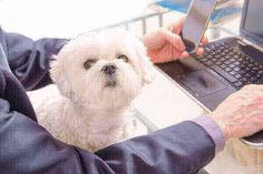 Your dog breeds, featuring articles about breed information, dog selection, training, grooming and care for dogs and puppies Types Of Dogs Breeds, Best Dog Breeds, Best Dogs, Maltese Dogs, Dogs And Puppies, Dogs Online, Malteser, Separation Anxiety, Therapy Dogs