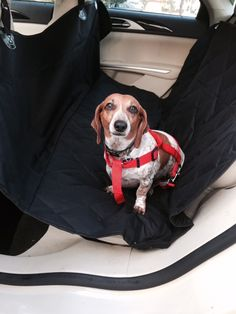 #Pet Seat #Cover for Car Rides to Make #Pets And Parents Happy! #PetSeatCover