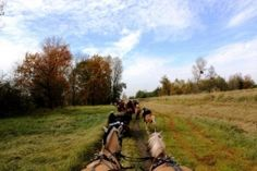 Mlodzikowo.pl - Gospodarstwo agroturystyczne, stadnina koni Fiord Galeria Country Roads