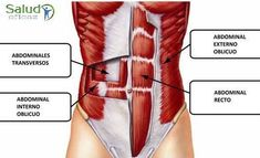 Diagram Of The Abdomen . Diagram Of The Abdomen Abdominal Muscle Diagram World Of Diagrams Best Core Workouts, Easy Workouts, Abdominal Infra, Pregnancy Abs, Thinner Waist, After Baby Workout, Stomach Vacuum, Toned Stomach, Pilates Training
