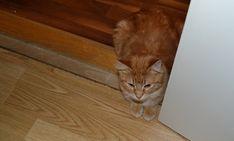 preppyoriental - Cats, Master Bedroom, Animals, Blogging, Master Suite, Gatos, Animales, Animaux, Animal