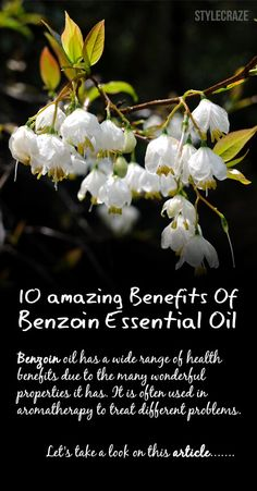 10 Amazing Benefits Of Benzoin Essential Oil