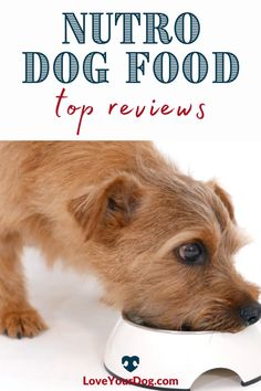 Thinking of introducing your dog to one of Nutro's dog food lines? We break down Nutro Wholesome Essentials, Nutro Ultra and Nutro Limited Ingredient in this food review. Best Puppies, Dogs And Puppies, Nutro Dog Food, Dog Food Reviews, Grain Free Dog Food, Pet Gate, Pet Treats, Pet Collars, Pet Beds
