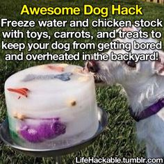 Frozen dog treats to keep them cool and hydrated on hot summer days