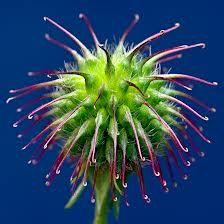 1000 Images About Weird Plants On Pinterest Weird