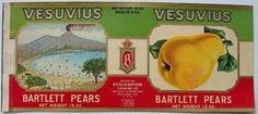 VESUVIUS Vintage San Jose Pear Can Label