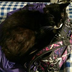 Gotta love #FurBabies! Midnight always has to be on something! Getting comfortable on my overnight bag and my purse is now a pillow!