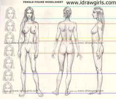 female figure anatomy proportion from front, side and back view.