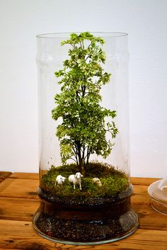 terrarium// just think, a little native tree or shrub that is kept small, some Irish moss and a ceramic sheep or two ... little Ireland ...
