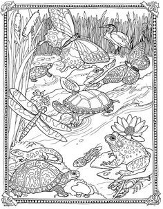 Jan Brett - Free Mossy Coloring Page - Lily pad Pond - so pretty!