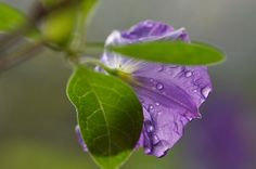 after the rain!
