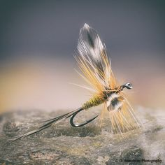 The Woodruff in the Catskill dry fly style.