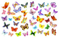 free graphic design | ... butterfly Flowers vector | Download Free Vectors graphic design