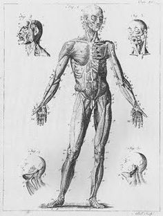 rembrandt human anatomy drawings - Google Search