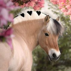 Cute Horse Pictures, Baby Animals Pictures, Cute Animal Photos, Funny Animals, Baby Animals Super Cute, Pretty Animals, Cute Little Animals, Animals Beautiful, Baby Horses