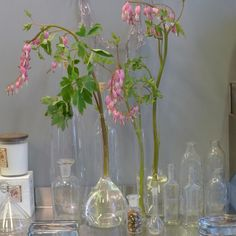 Old-fashioned bleeding heart in lab vessels. polux fleuriste florist nyc l Gardenista