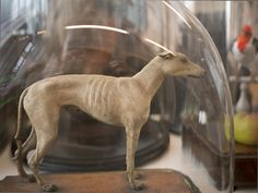 "Walter Potter Taxidermy: My Trip to Alexis Turner's ""London Taxidermy"": Guest Post by Joanna Ebenstein, Morbid Anatomy Editor and Co-Author ..."