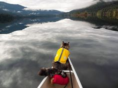 Keep Rowing, Human.  We Must Reach The Shore By Dusk