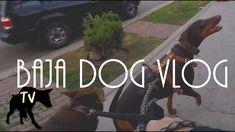Walking around Playas De Tijuana with Doberman & GSD mix | Baja Dog Vlog 14